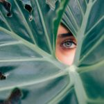 eye through leaf
