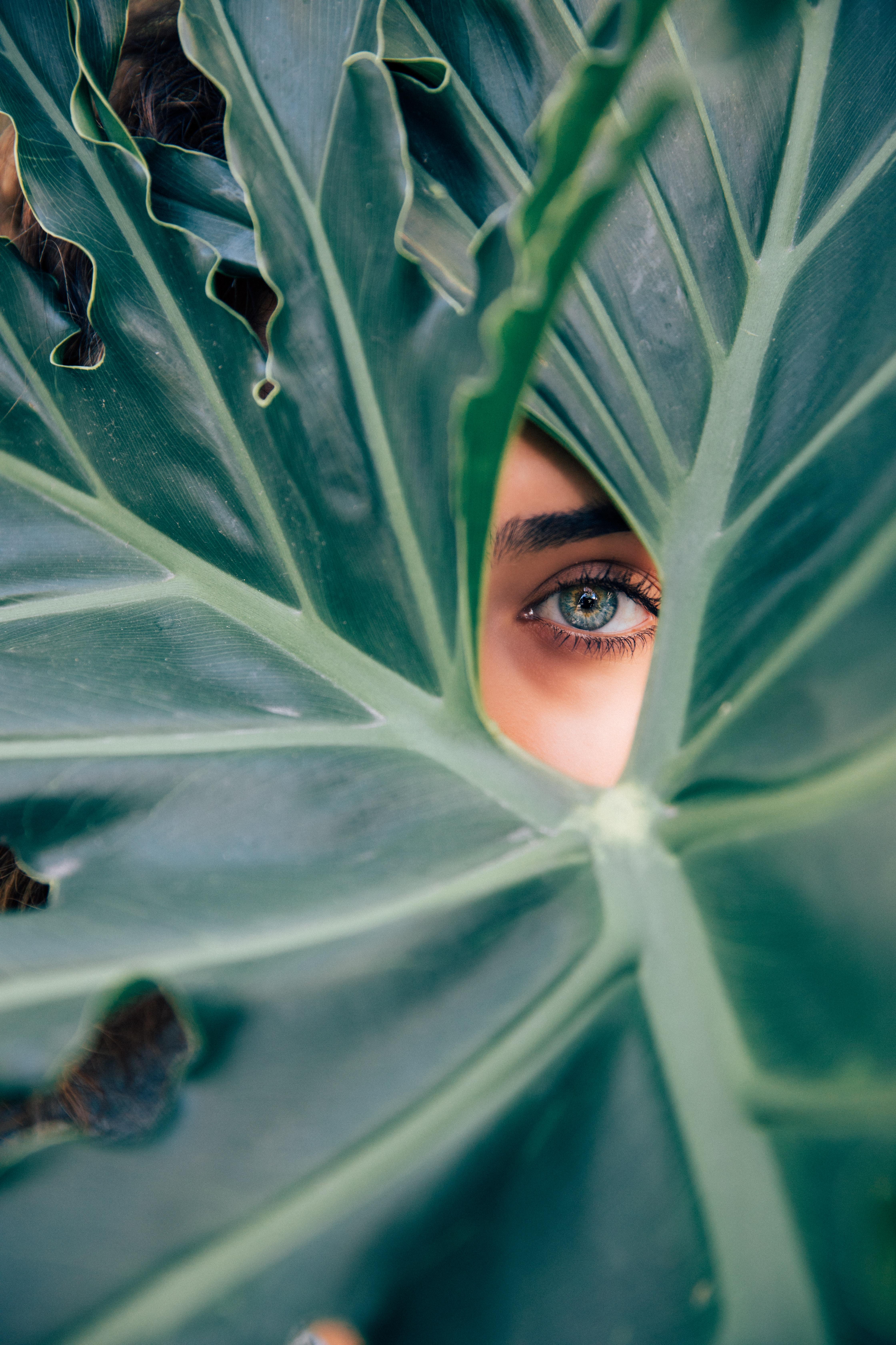 eye through leaf